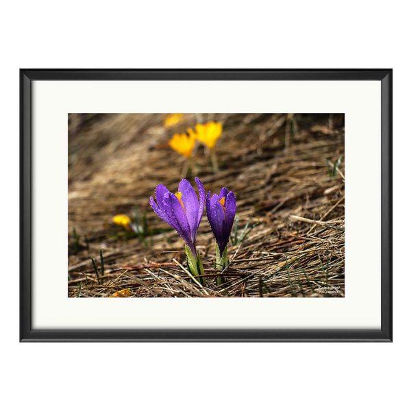 Flower, Photography Framed Art Print by Raina Sind