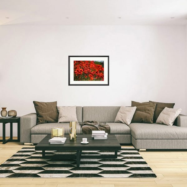 Poppies, Photography Framed Art Print by Raina Sind