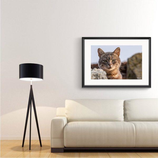 Cat, Photography Framed Art Print by Raina Sind