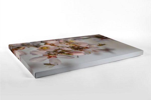 Spring - Photography Canvas Art Print