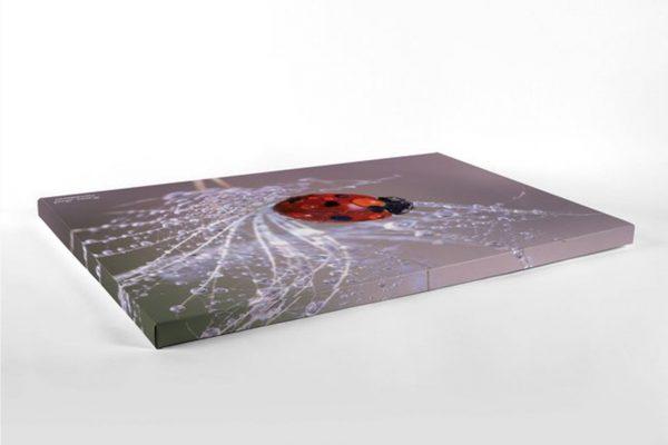 Ladybug - Photography Canvas Art Print