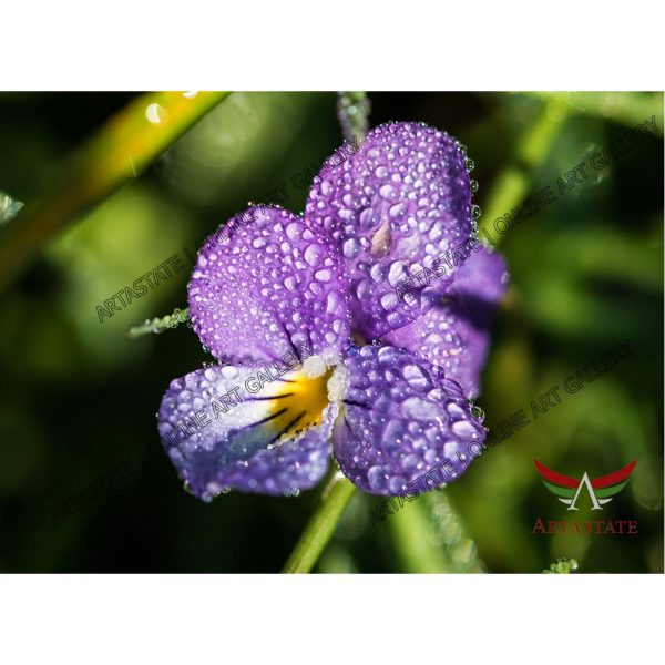 Flower, Digital Photo - Image File - Stock Image