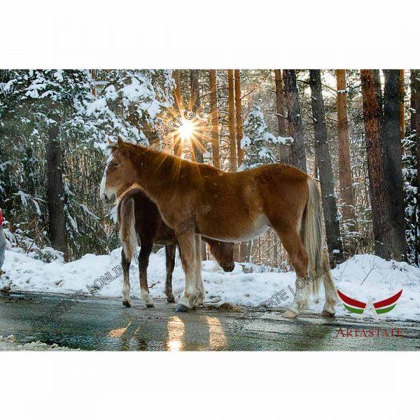 Horses, Digital Photo - Image File - Stock Image