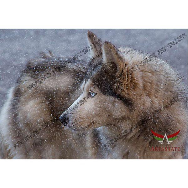 Wolf, Digital Photo - Image File - Stock Image