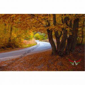 Autumn, Digital Photo - Stock Image