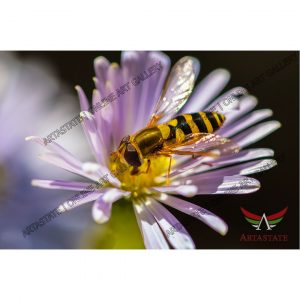 Bee, Digital Photo - Stock Image