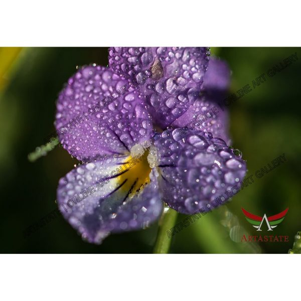 Flower, Digital Photo - Stock Image
