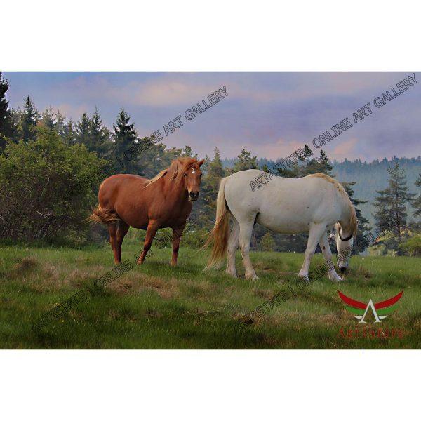 Horse, Digital Photo - Stock Image