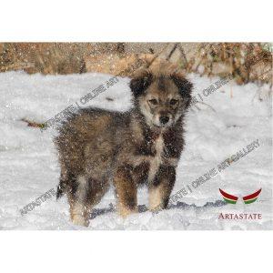 Dog, Digital Photo - Stock Image