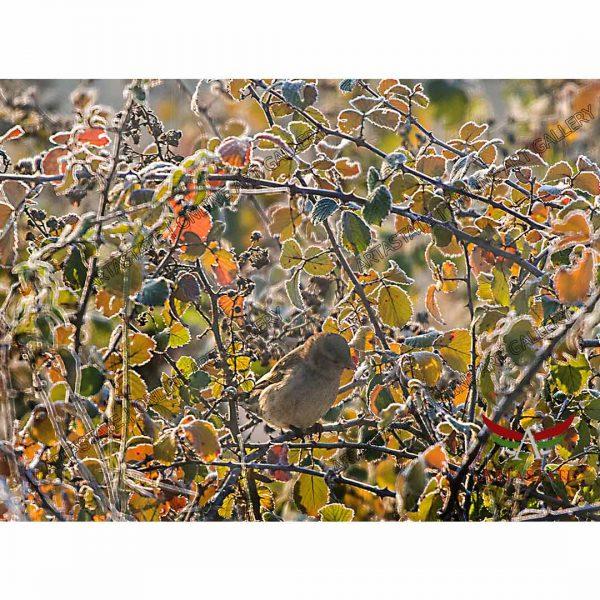 Sparrow, Digital Photo - Stock Image