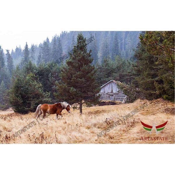 Wild Horse, Digital Photo - Stock Image