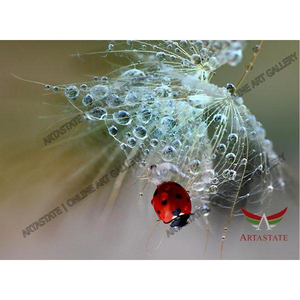 Ladybug, Digital Photo - Stock Image