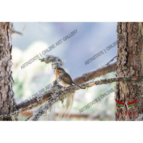Bird, Digital Photo - Stock Image