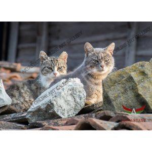 Cats, Digital Photo - Stock Image