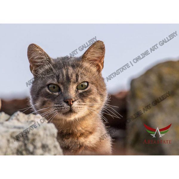 Cat, Digital Photo - Stock Image