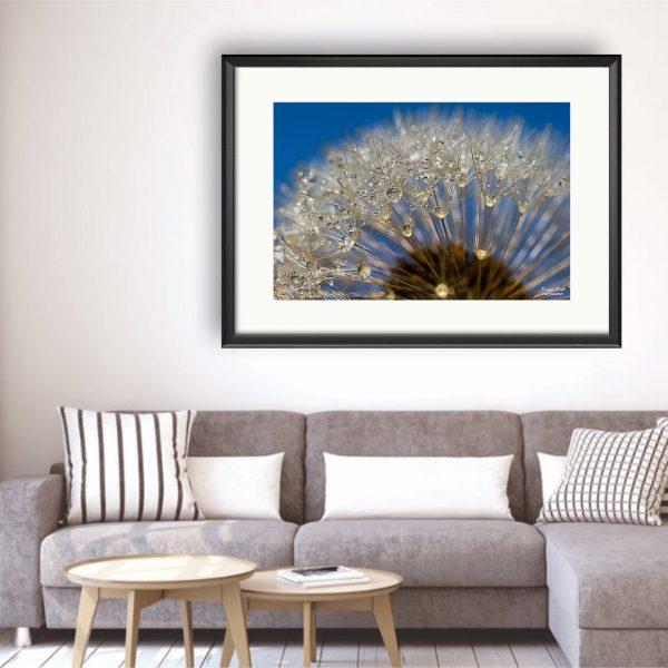 Dandelion, Photography Framed Art Print by Raina Sind