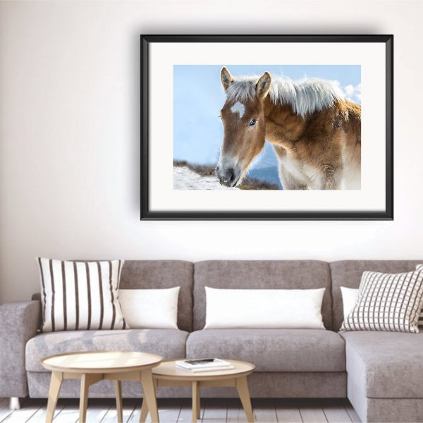 Horse, Photography Framed Art Print by Raina Sind