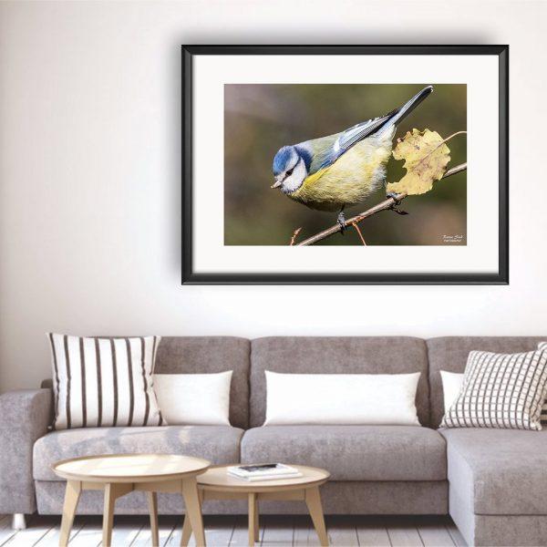 Bird, Photography Framed Art Print by Raina Sind