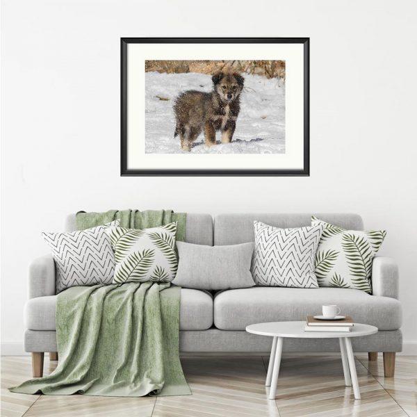 Dog, Photography Framed Art Print by Raina Sind