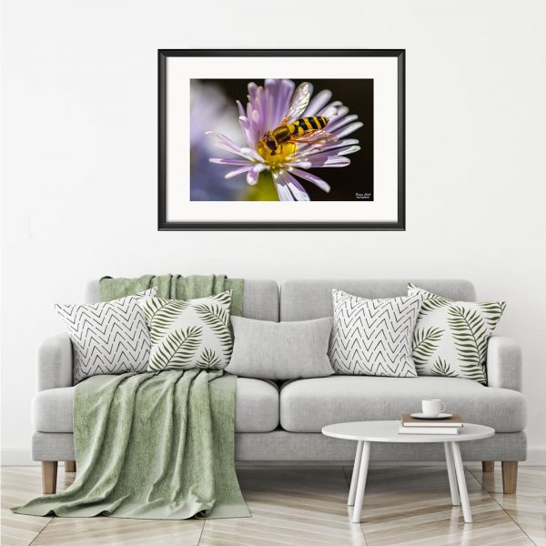 Bee, Photography Framed Art Print by Raina Sind