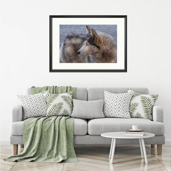 Husky, Photography Framed Art Print by Raina Sind