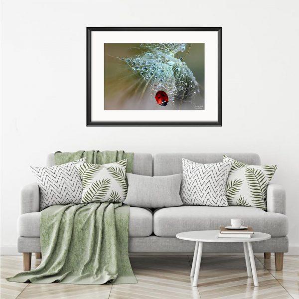 Ladybug, Photography Framed Art Print by Raina Sind