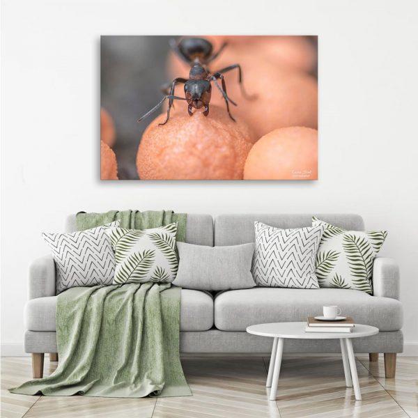 Ant - Photography Canvas Art Print